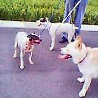 夕方の散歩(2004.8.5)