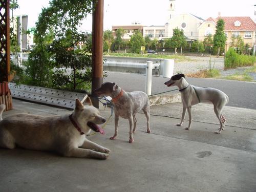 三匹いっしょ(2004.8.20)